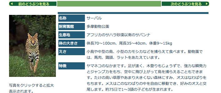 どうぶつ図鑑「サーバル」 / 東京ズーネット