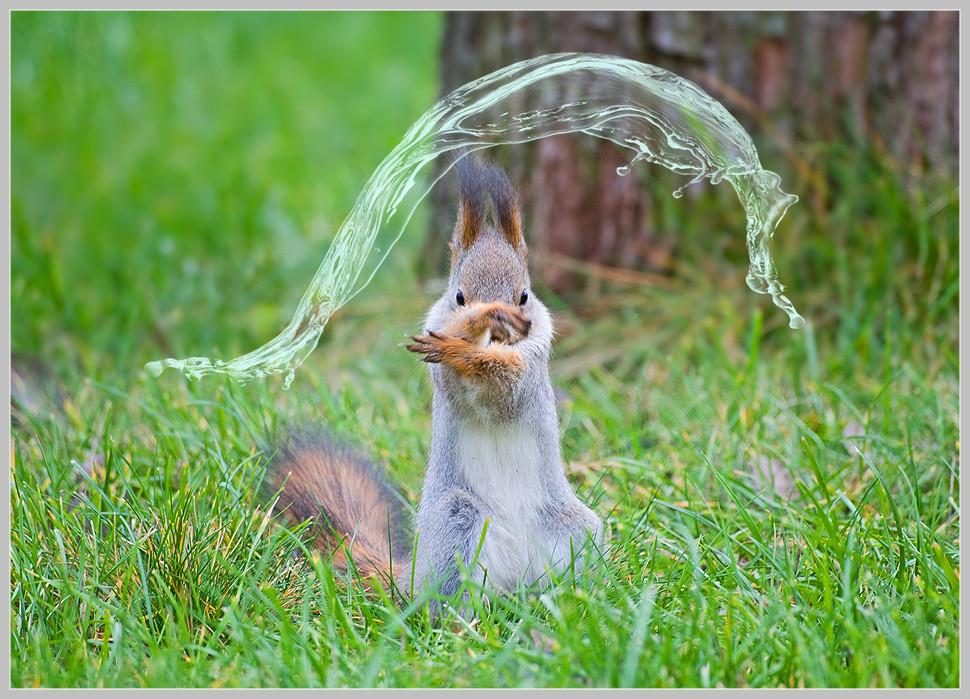 水を操るリスの元ネタ画像